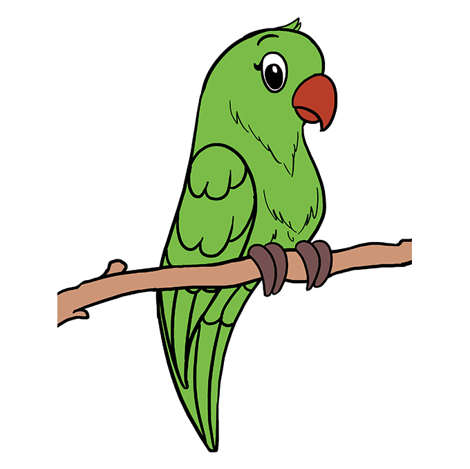How to Draw Parrot: Step 10