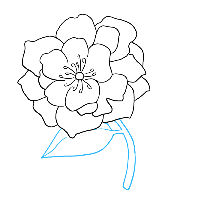 How to Draw Peony: Step 7