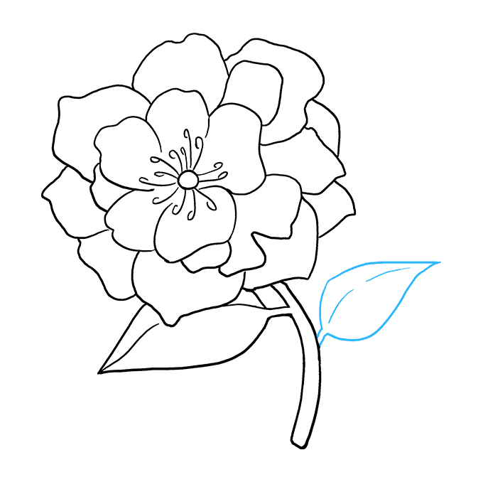 How to Draw Peony: Step 8