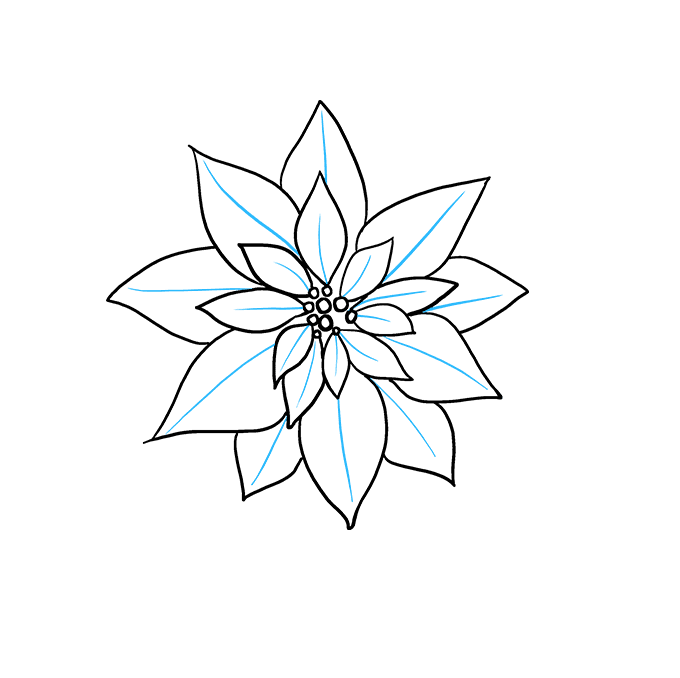How to Draw Poinsettia Step 07