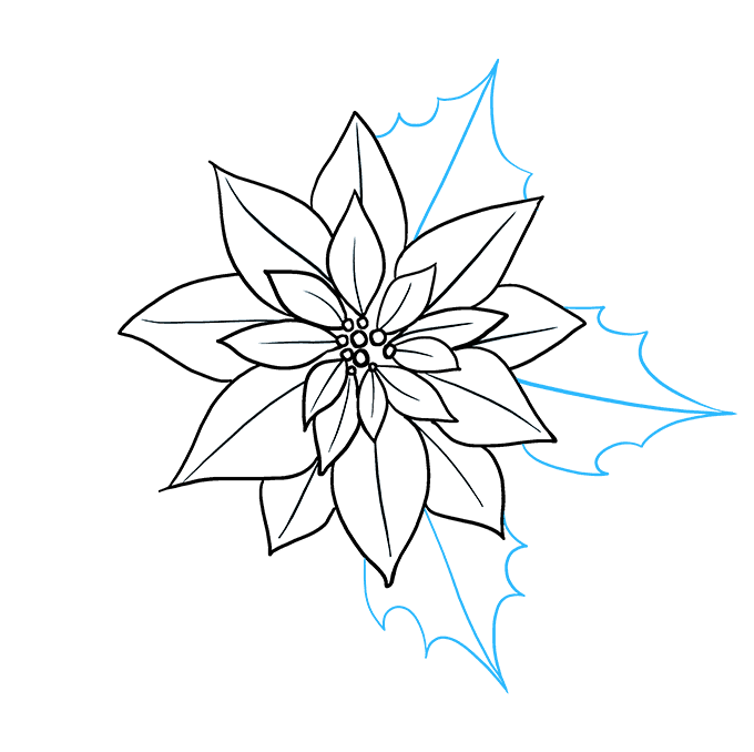 How to Draw Poinsettia Step 08