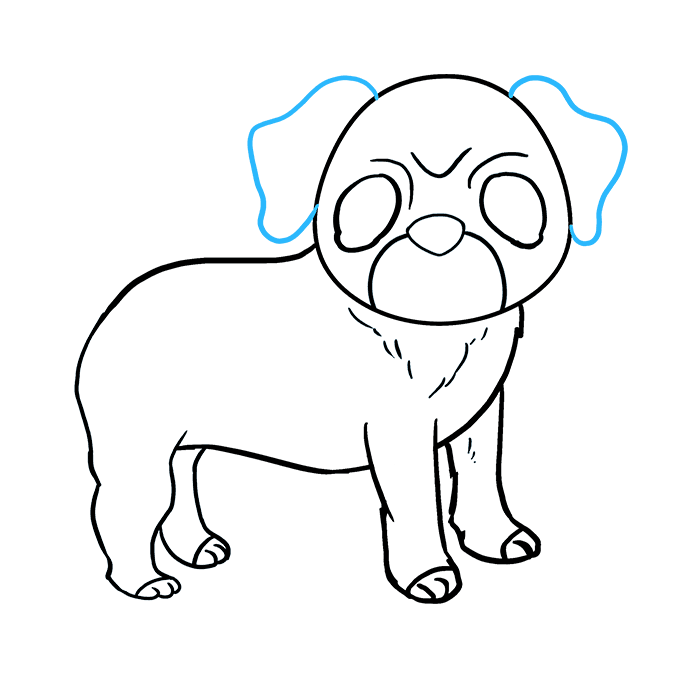 How to Draw Pug: Step 8