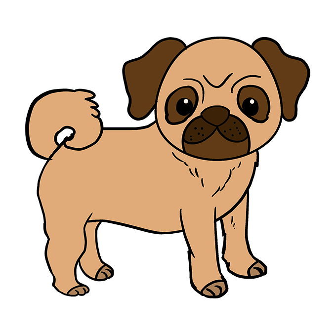 How to Draw Pug: Step 10