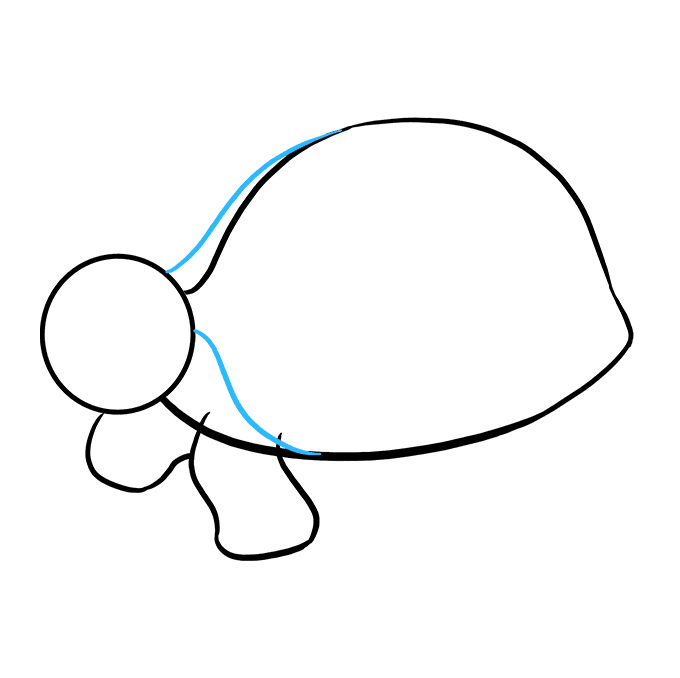 How to Draw Sea Turtle: Step 5