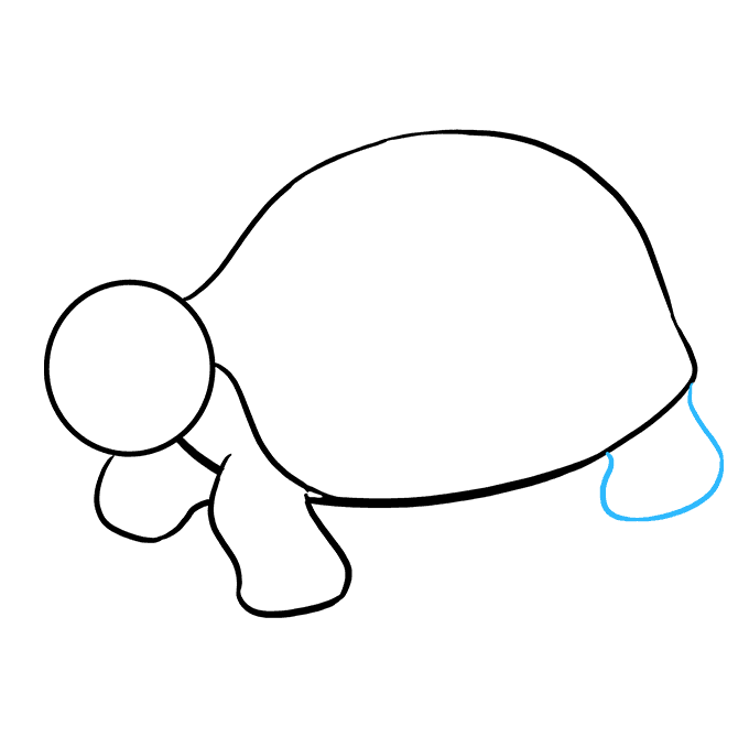 How to Draw Sea Turtle: Step 7