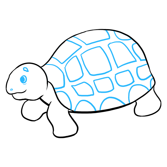 How to Draw Sea Turtle: Step 9
