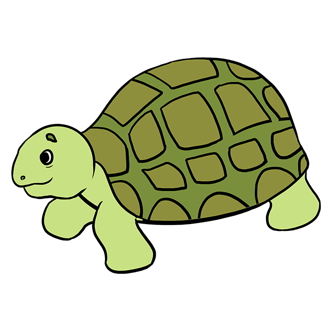 How to Draw Sea Turtle: Step 10