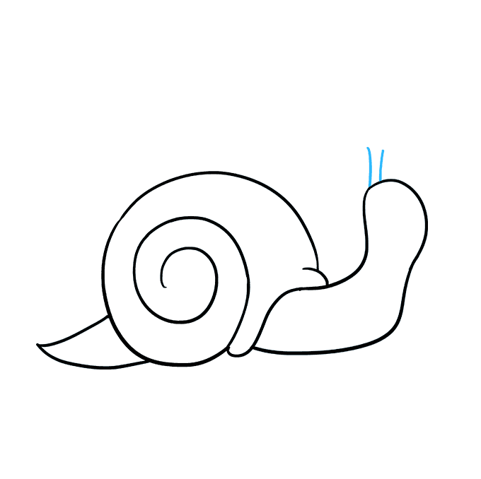 How to Draw a Snail Step 05