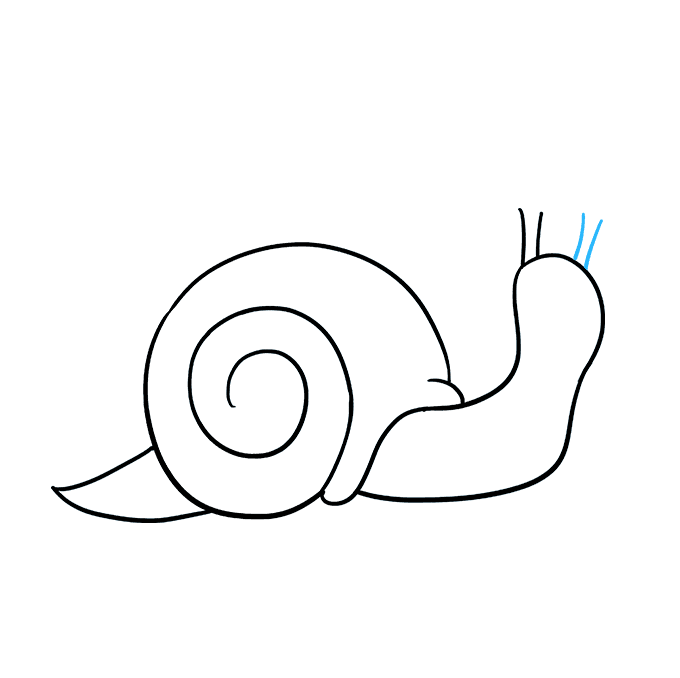 How to Draw a Snail Step 06