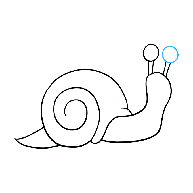 How to Draw a Snail Step 08