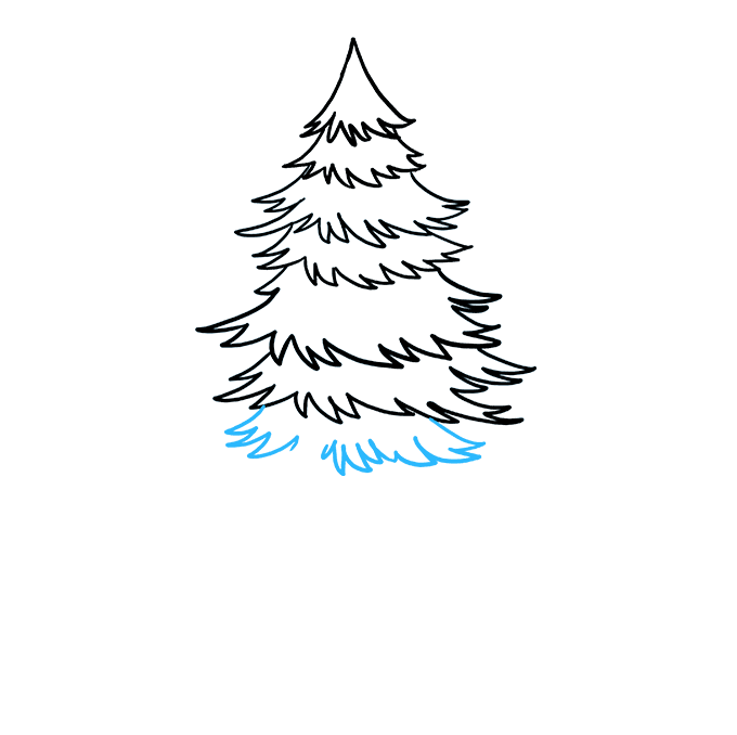 How to Draw Spruce: Step 6