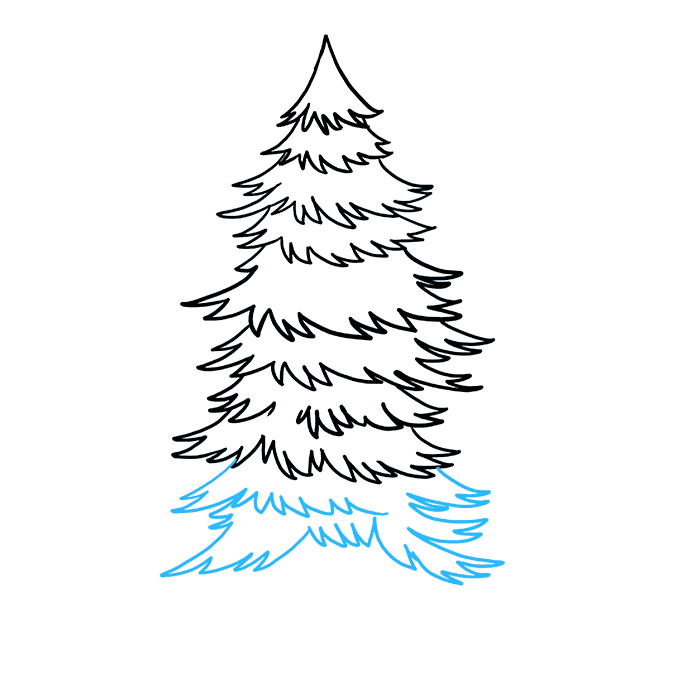 How to Draw Spruce: Step 8