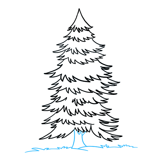 How to Draw Spruce: Step 9