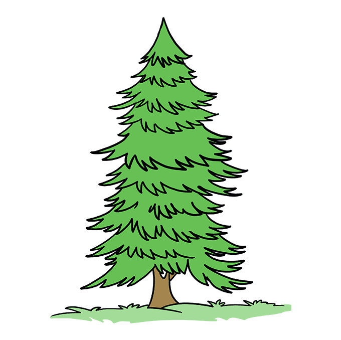 How To Draw A Spruce Tree Really Easy Drawing Tutorial