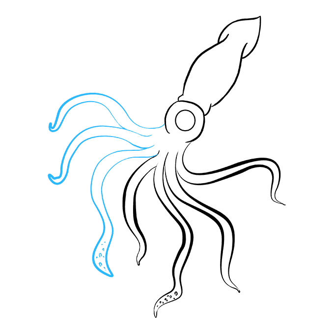 How to Draw Squid: Step 7
