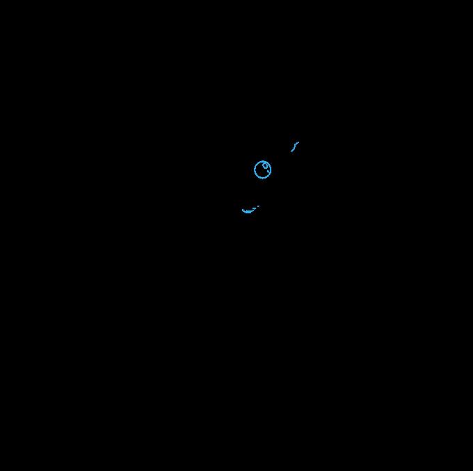Cómo dibujar calamar: Paso 9