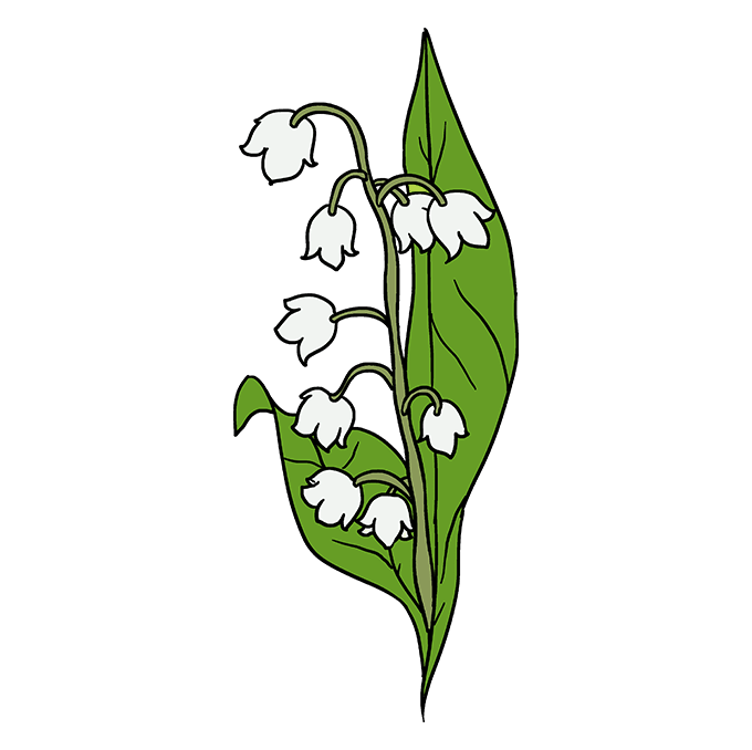 How to Draw Lily of the Valley: Step 10