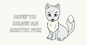 How to Draw an Arctic Fox Featured Image