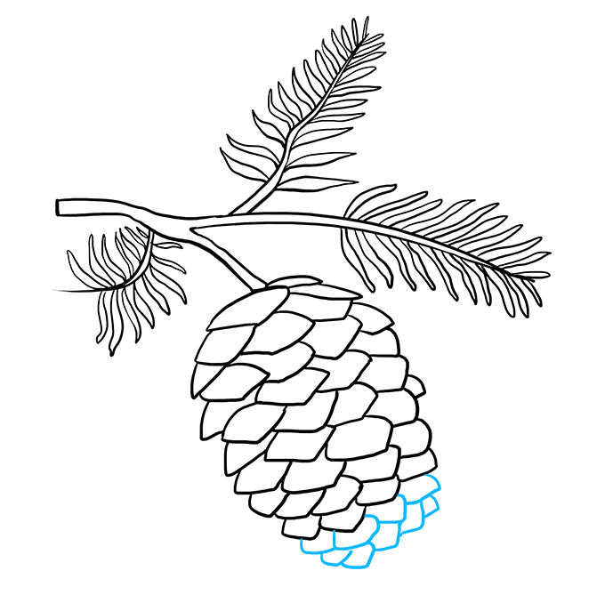 How to Draw Pinecone: Step 8