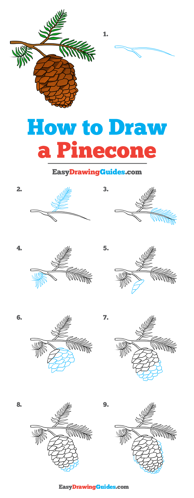 How to Draw Pinecone