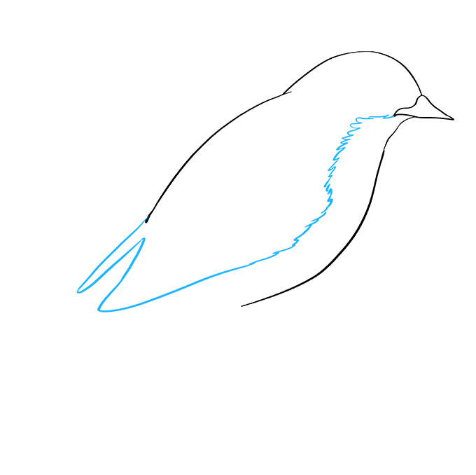 How to Draw Eastern Bluebird: Step 3
