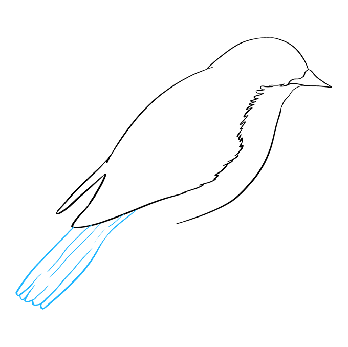 How to Draw Eastern Bluebird: Step 4