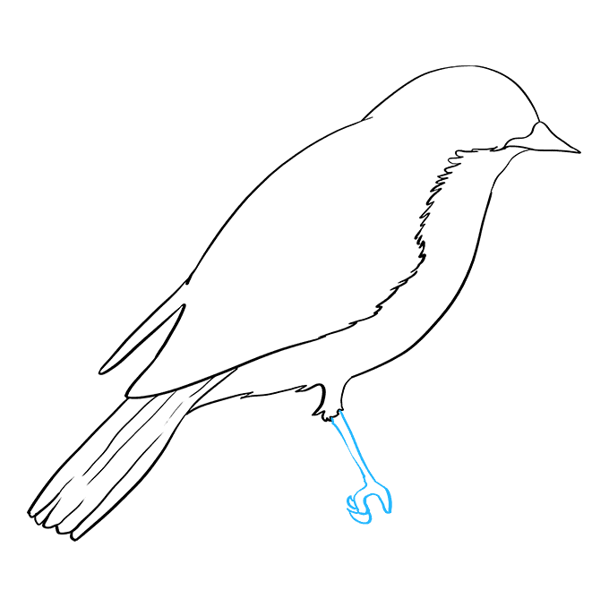 How to Draw Eastern Bluebird: Step 6