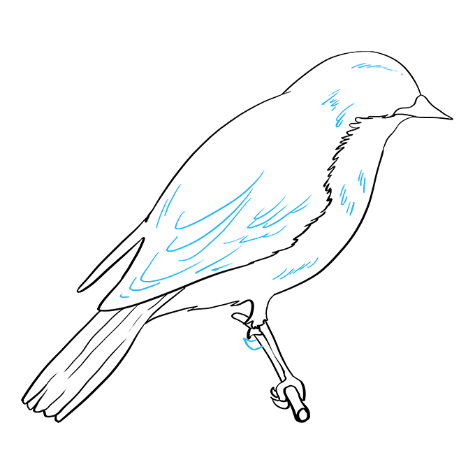 How to Draw Eastern Bluebird: Step 8