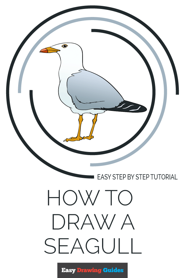 How to Draw Seagull | Share to Pinterest