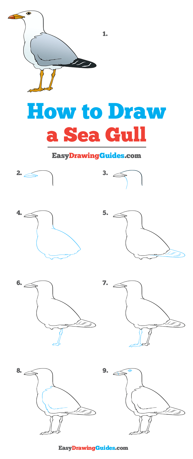 How to Draw a Seagull Step by Step Tutorial Image