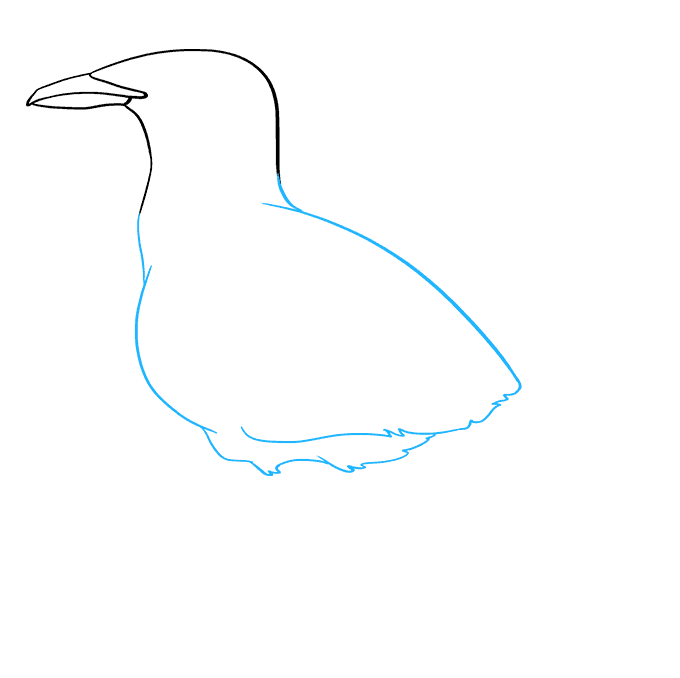 How to Draw a Seagull Step 04
