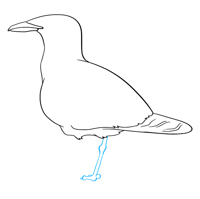 How to Draw Seagull: Step 6