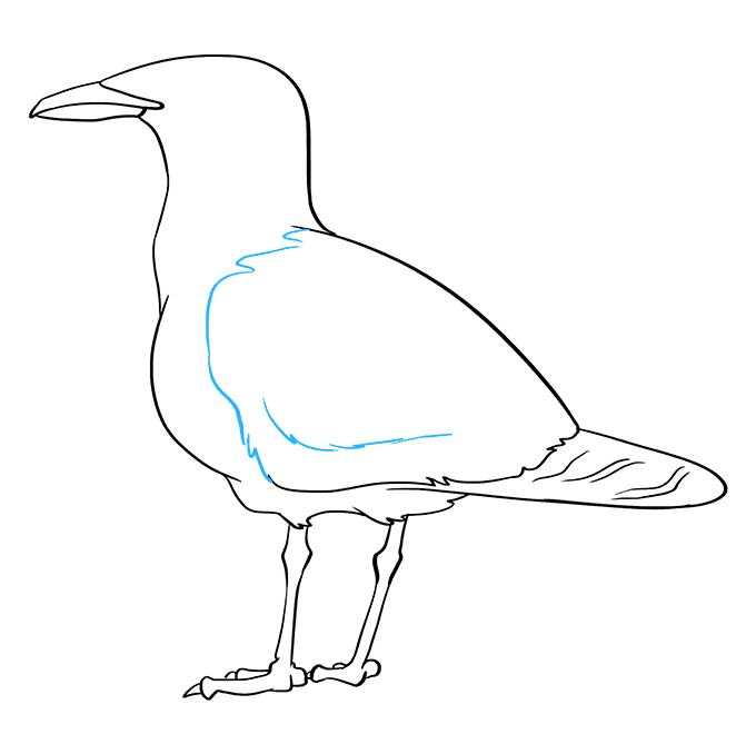 How to Draw Seagull: Step 8