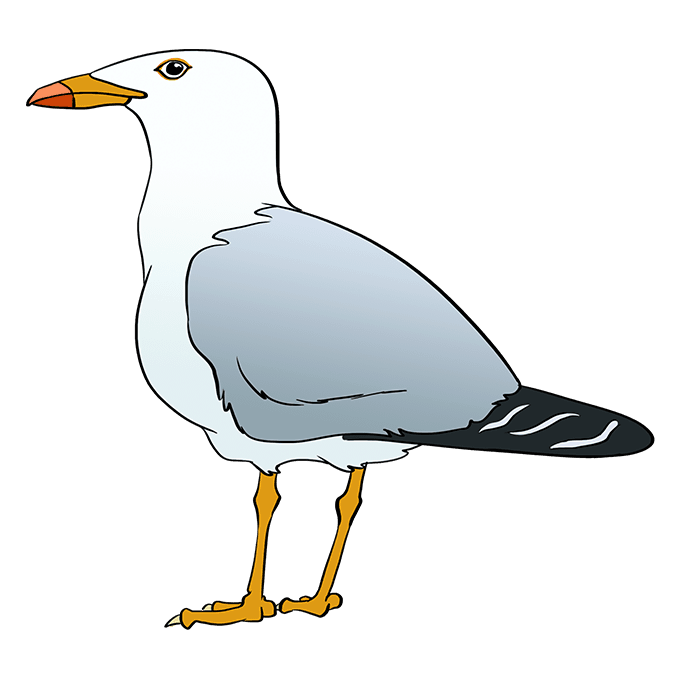 How to Draw Seagull: Step 10