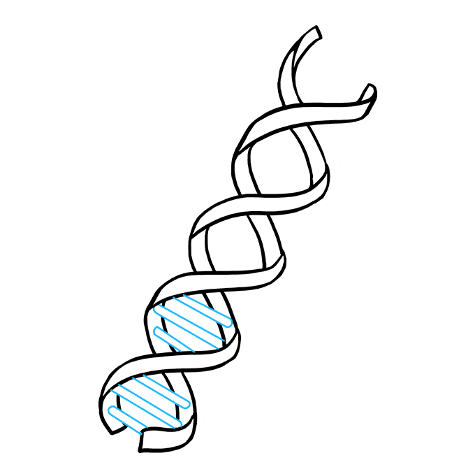How to Draw DNA: Step 6