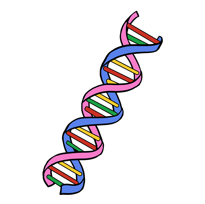 How to Draw DNA: Step 10