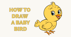 How to Draw a Baby Bird Featured Image