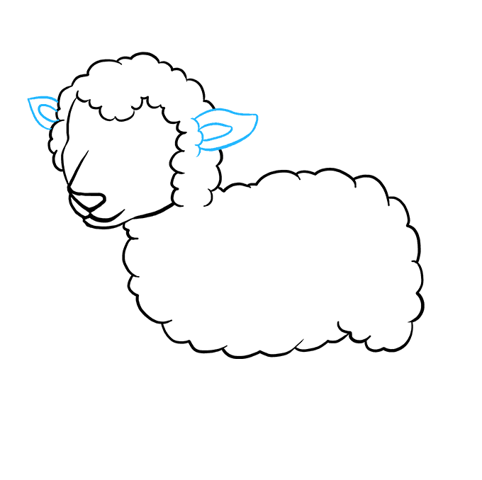 How to Draw a Lamb Step 04