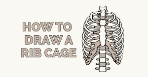 How to Draw a Rib Cage Featured Image