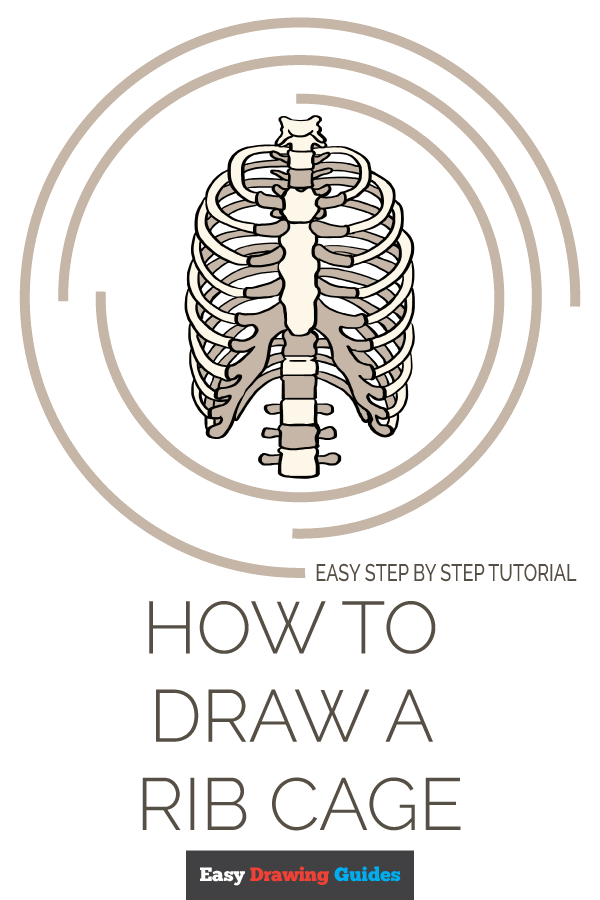 How to Draw a Rib Cage Pinterest Image