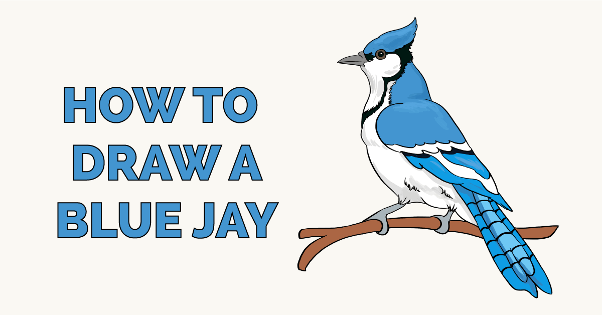 How to Draw a Blue Jay Featured Image