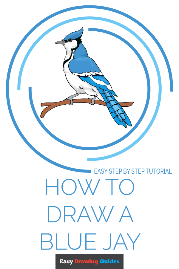 How to Draw a Blue Jay Pinterest Image