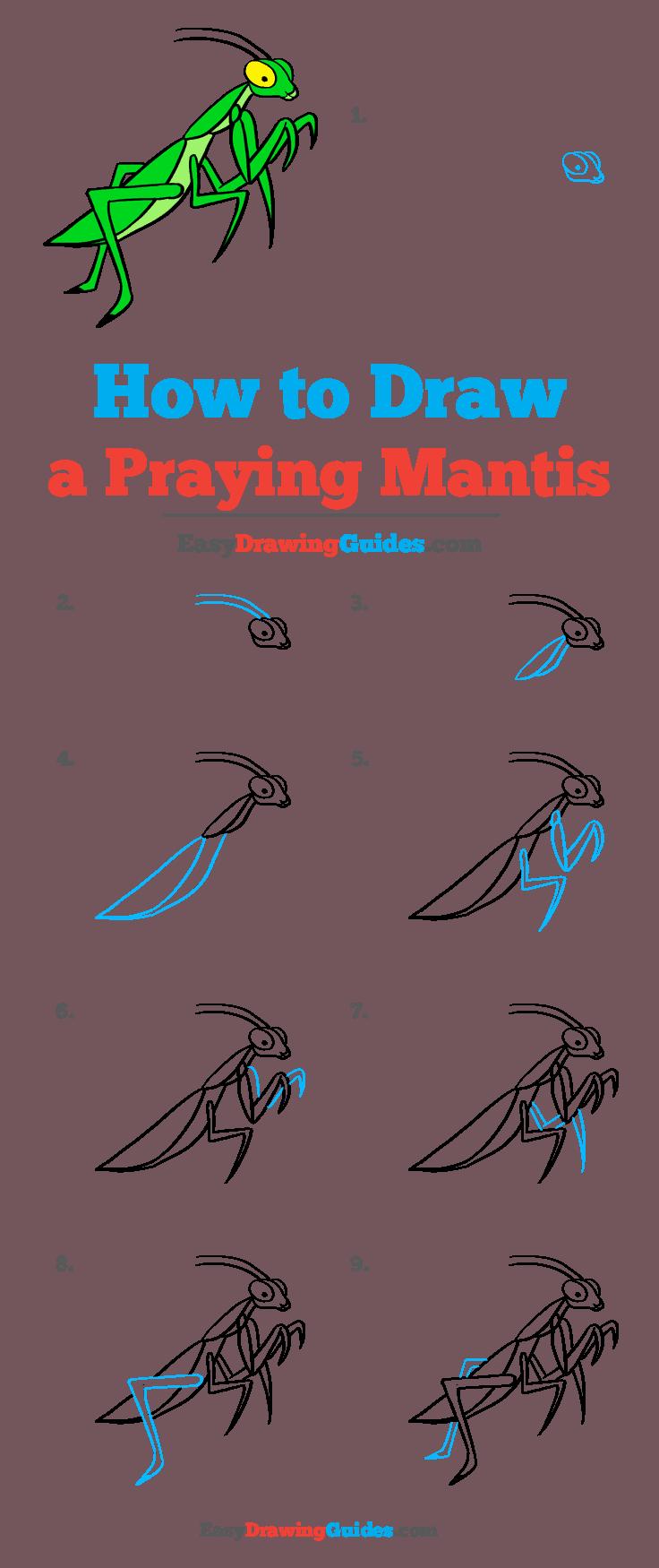 How to Draw Praying Mantis