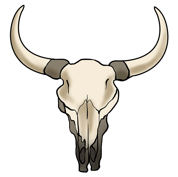 How to Draw a Bull Skull Step 10