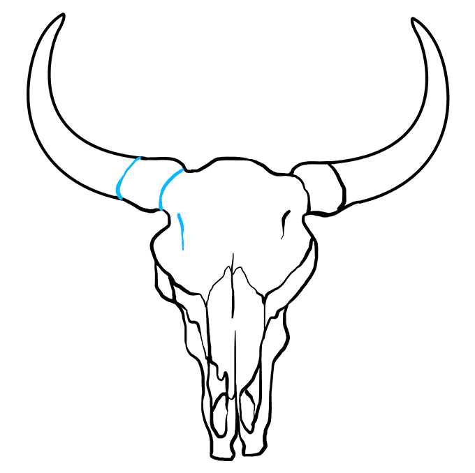 How to Draw a Bull Skull Step 09