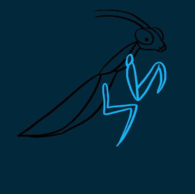 How to Draw Praying Mantis: Step 5