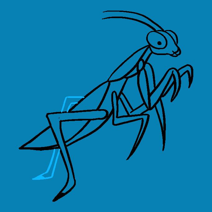 How to Draw Praying Mantis: Step 9