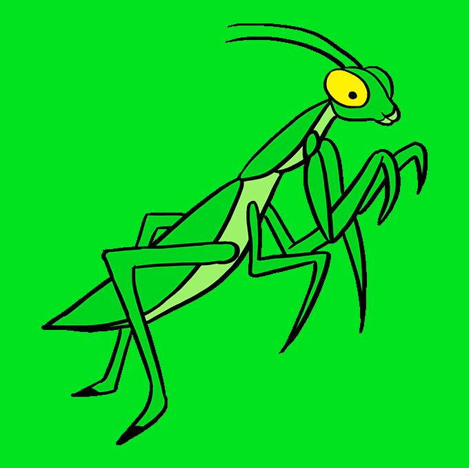 How to Draw Praying Mantis: Step 10