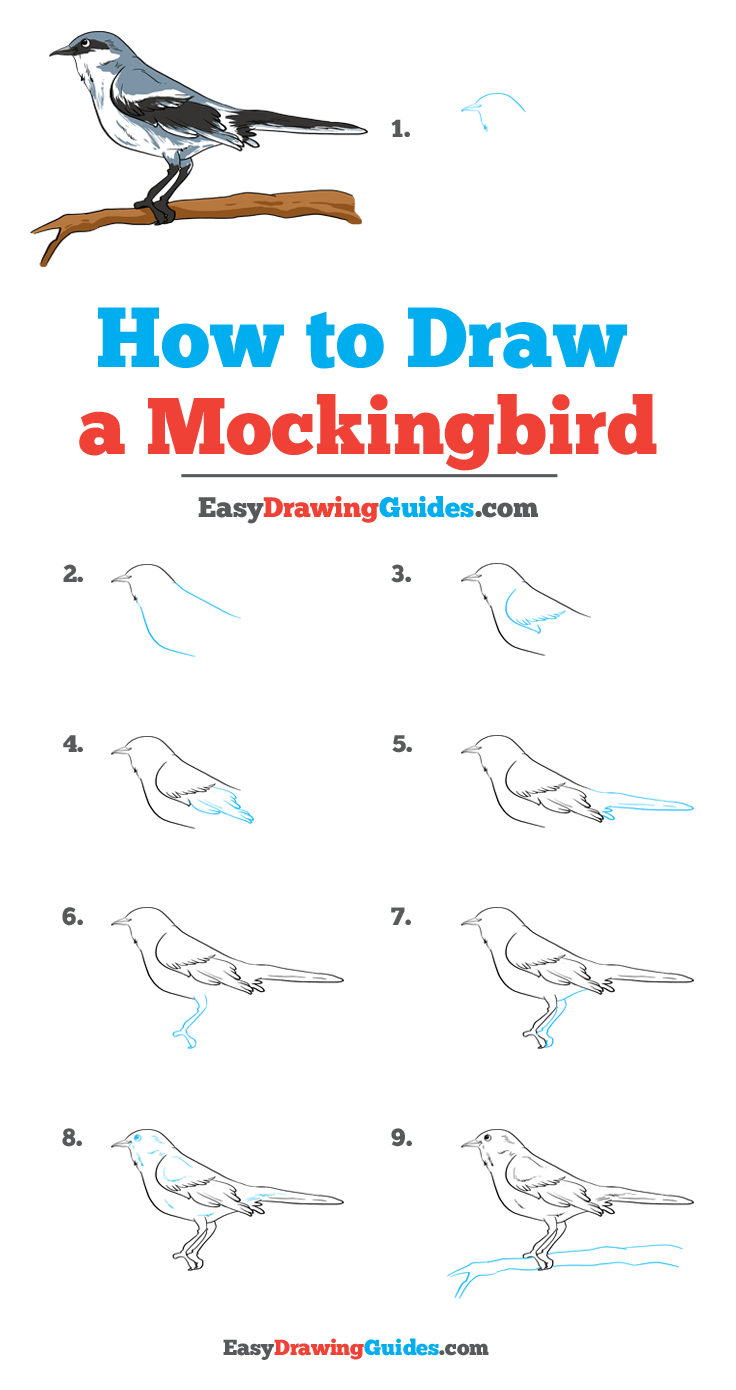 How to Draw Mockingbird | Share to Pinterest