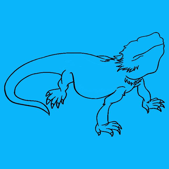 How to Draw Bearded Dragon Lizard: Step 7